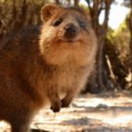 3 Hour Keys2Drive Pack (Manual)